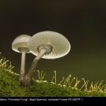 8371_Nigel Spencer_Porcelain Fungi
