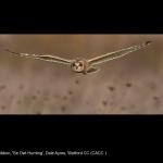 8751_Dale Ayres_Se Owl Hunting