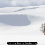 The Lone Tree by Stephen Lee