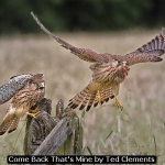 Come Back That's Mine by Ted Clements