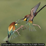 European Bee Eater Dispute by Ralph Snook