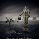 Forlorn by Nick Walton, Inn Focus