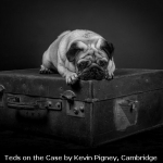 Teds on the Case by Kevin Pigney, Cambridge