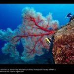 15632_David Keep_Gorgonian Sea Fan