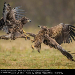 Clash Of The Titans by James Macarthur, RR Derby