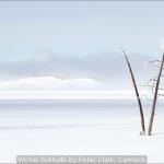 Winter Solitude by Peter Clark, Cannock