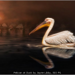 Pelican at Dusk by Jayne Libby, ISO PG