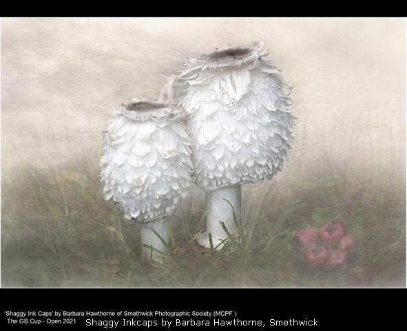 Shaggy Inkcaps by Barbara Hawthorne, Smethwick