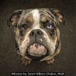Winston by Janet Wilson-Chalon, Mold