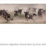 Wildebeests Migration Masai Mara by Arun Mohanraj, Chorley