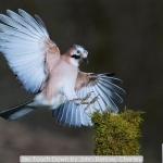 Jay Touch Down by John Barlow, Chorley