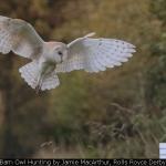 Barn Owl Hunting by Jamie MacArthur, Rolls Royce Derby