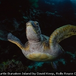 Green Turtle Bunaken Island by David Keep, Rolls Royce Derby PS