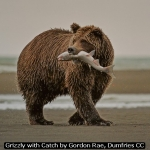 Grizzly with Catch by Gordon Rae, Dumfries CC