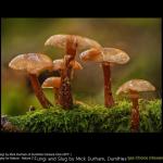 Fungi and Slug by Mick Durham, Dumfries