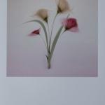 Delicate Shades by Diane Owen, Chorley