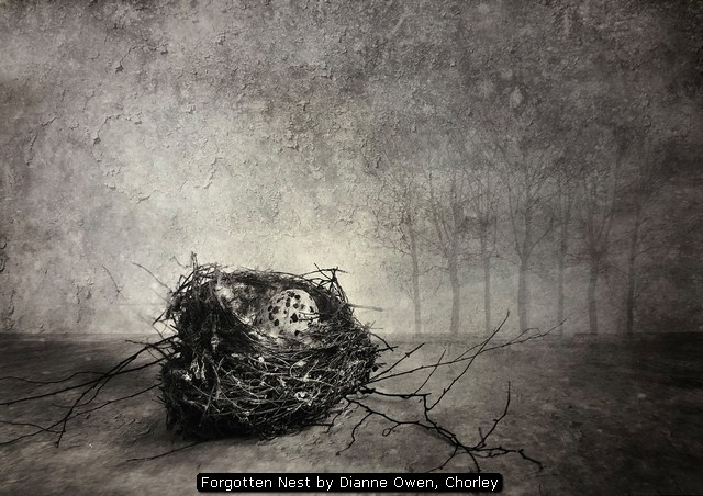 Forgotten Nest by Dianne Owen, Chorley