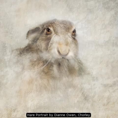 Hare Portrait by Dianne Owen, Chorley