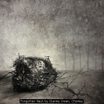 Forgotten Nest by Dianne Owen, Chorley