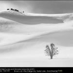 Bison on the Ridge by Jane Lee, Dorchester