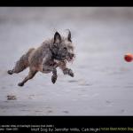 Wolf Dog by Jennifer Willis, Catchlight
