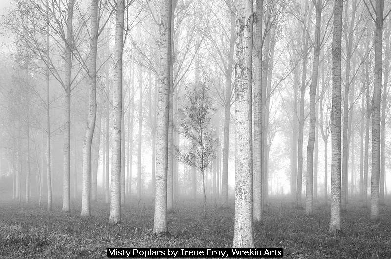 Misty Poplars by Irene Froy, Wrekin Arts