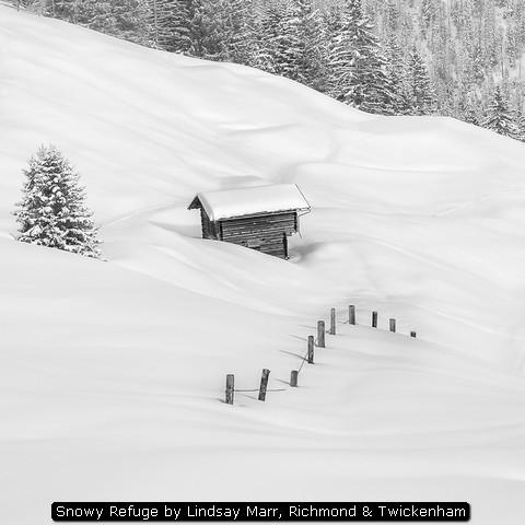 Snowy Refuge by Lindsay Marr, Richmond & Twickenham