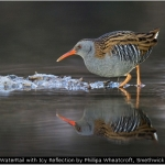 WaterRail with Icy Reflection by Phillipa Wheatcroft, Smethwick