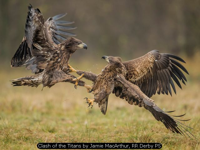 Clash of the Titans by Jamie MacArthur, RR Derby PS