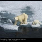 Living on Thin Ice by Sue Blythe, LCPU