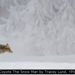 Coyote The Snow Man by Tracey Lund, YPU