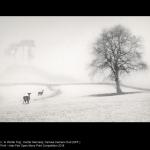 In Winter Fog by Hunter Kennedy, SPF