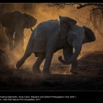 Chasing Elephants by Andy Caws, Wayland