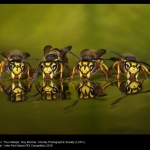 Four Wasps by Roy Rimmer, LCPU
