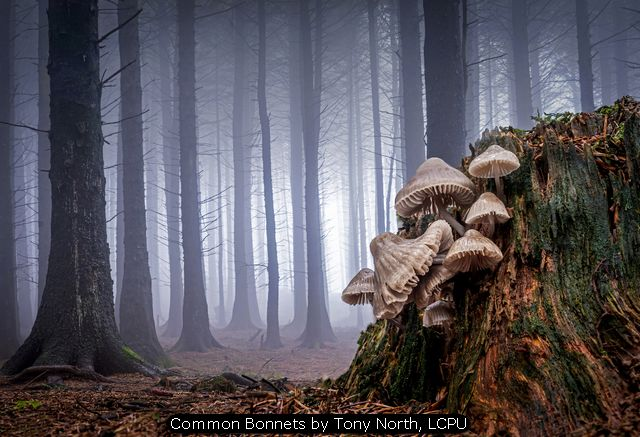 Common Bonnets by Tony North, LCPU