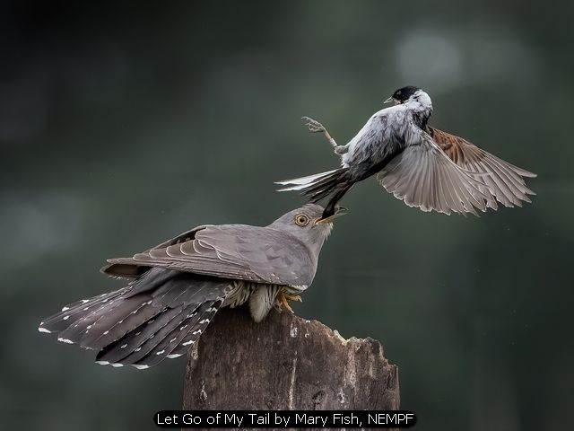 Let Go of My Tail by Mary Fish, NEMPF