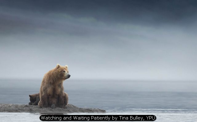 Watching and Waiting Patiently by Tina Bulley, YPU