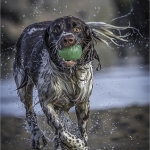 Wet, Gerald Henry (WPF)