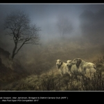 Bleak Grazers by Alan Jenkinson, Bridgend