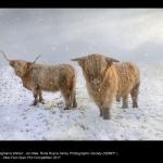 Highland Winter by Jon Mee, Rolls Royce Derby