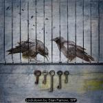 Lockdown by Stan Farrow, SPF